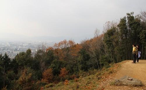 nature (4)